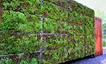 Yeşil duvarlar